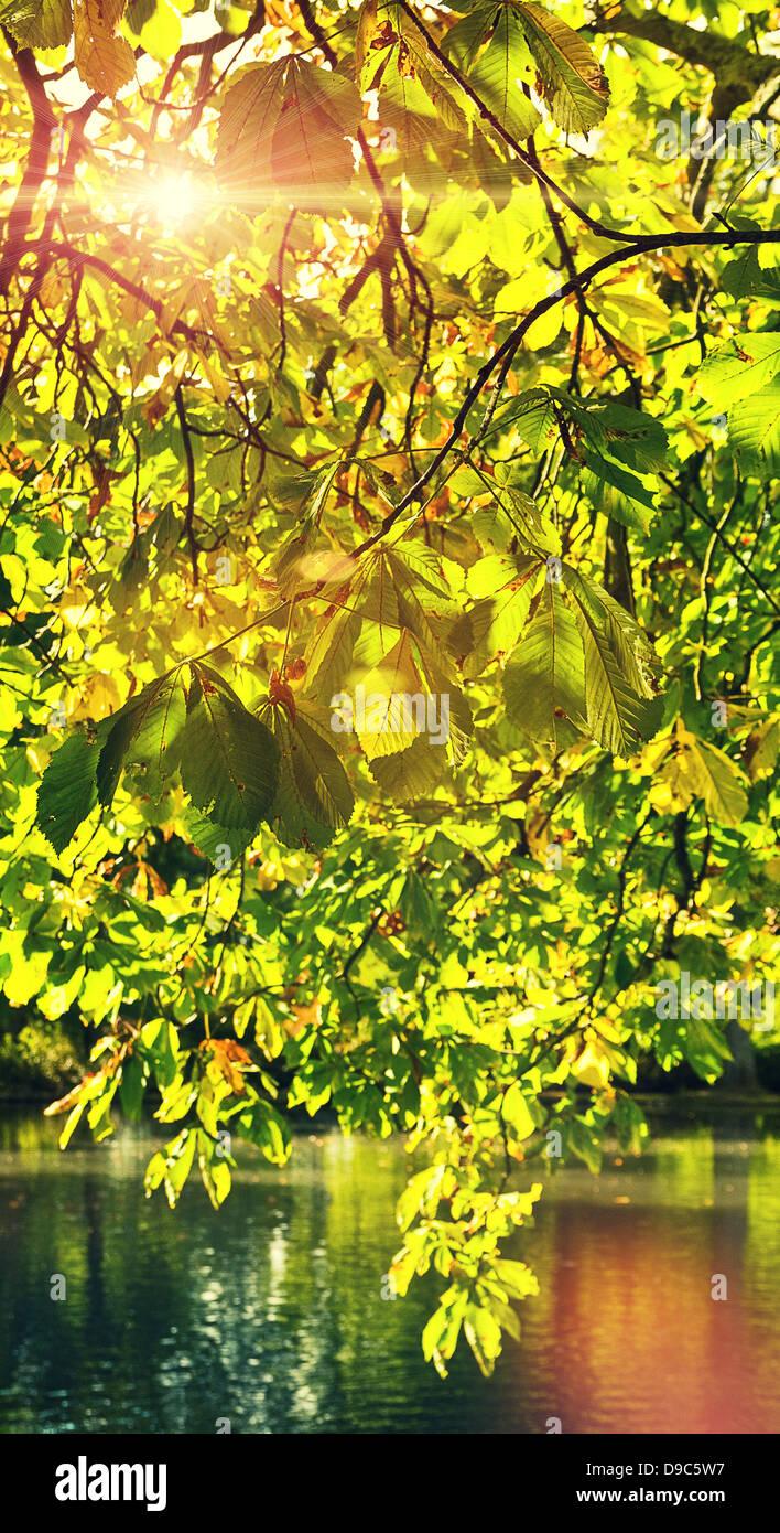 Lumière du soleil à travers feuilles Photo Stock
