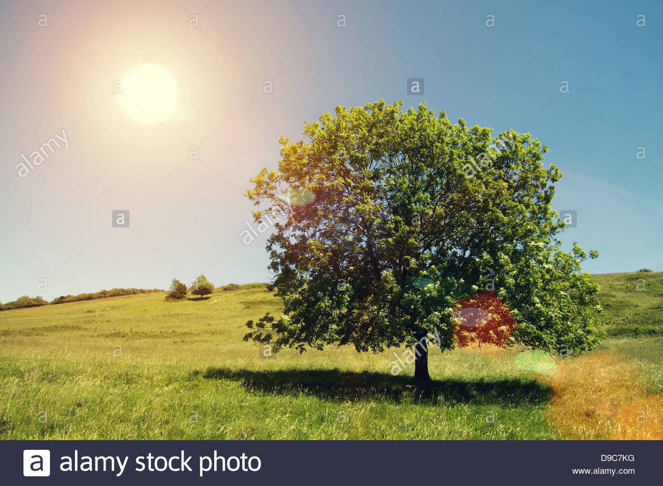 arbre arrondi soleil Photo Stock