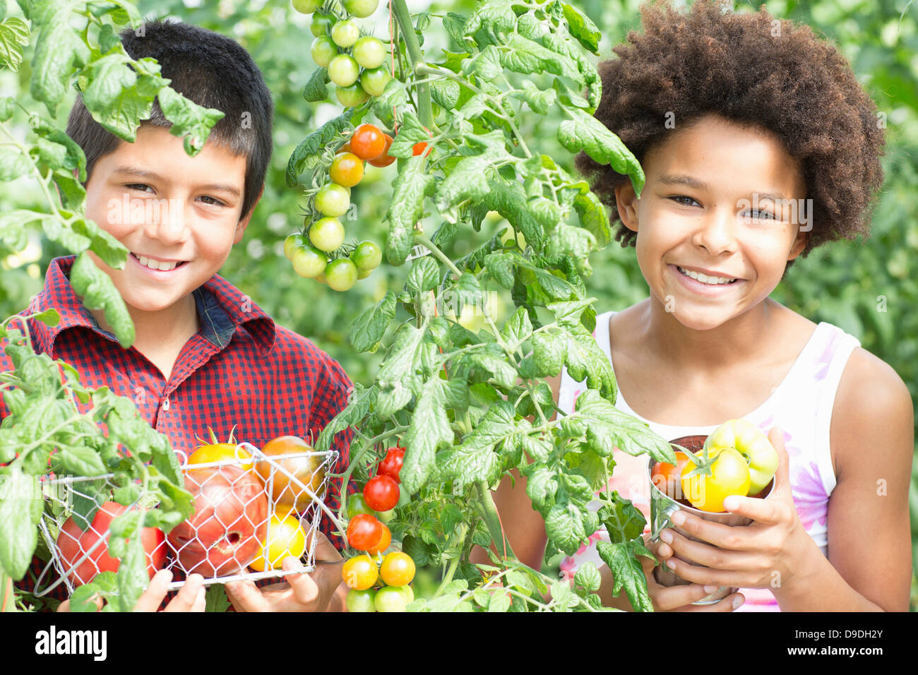 Tomates fraîches préparation Enfants Banque D'Images