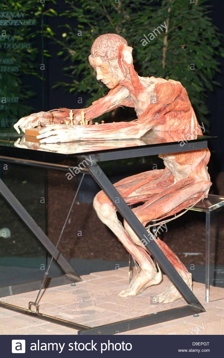 Anatomie des organes anatomiques de l'autopsie du corps body art cadavre mort d'échecs pièce décédé Photo Stock