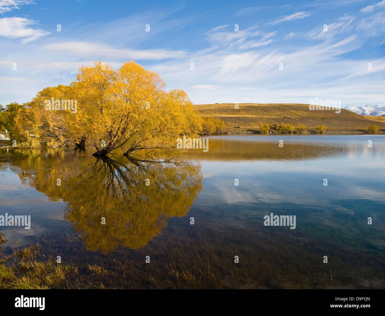 Les arbres d'automne reflète dans l'eau le matin, le lac Alexandrina, région de Canterbury, île Photo Stock