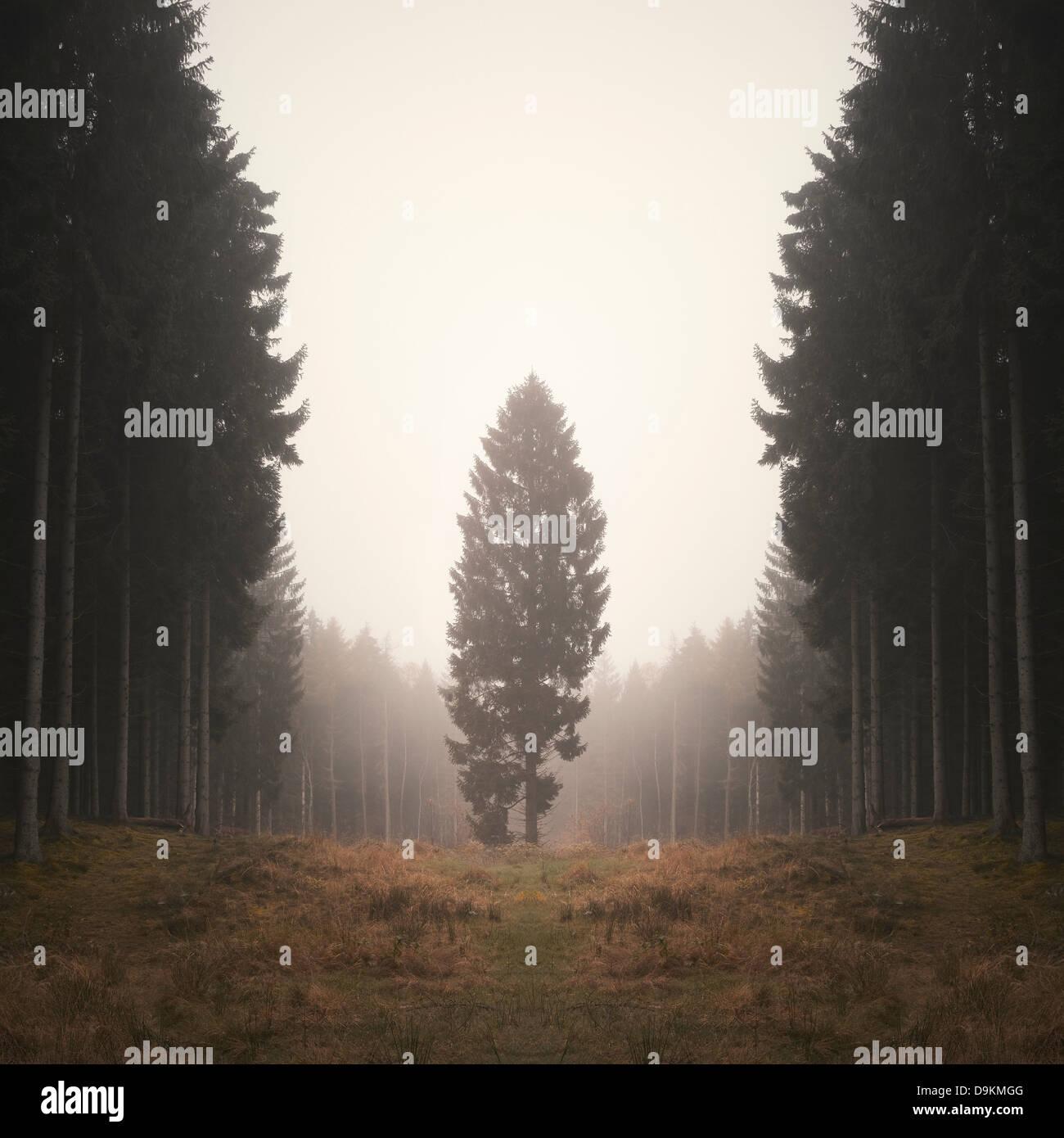 Arbre isolé en forêt brumeuse Photo Stock