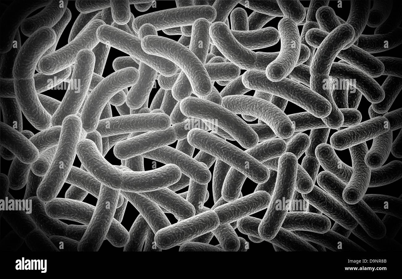 Vue microscopique des bacilles de bactéries. Banque D'Images
