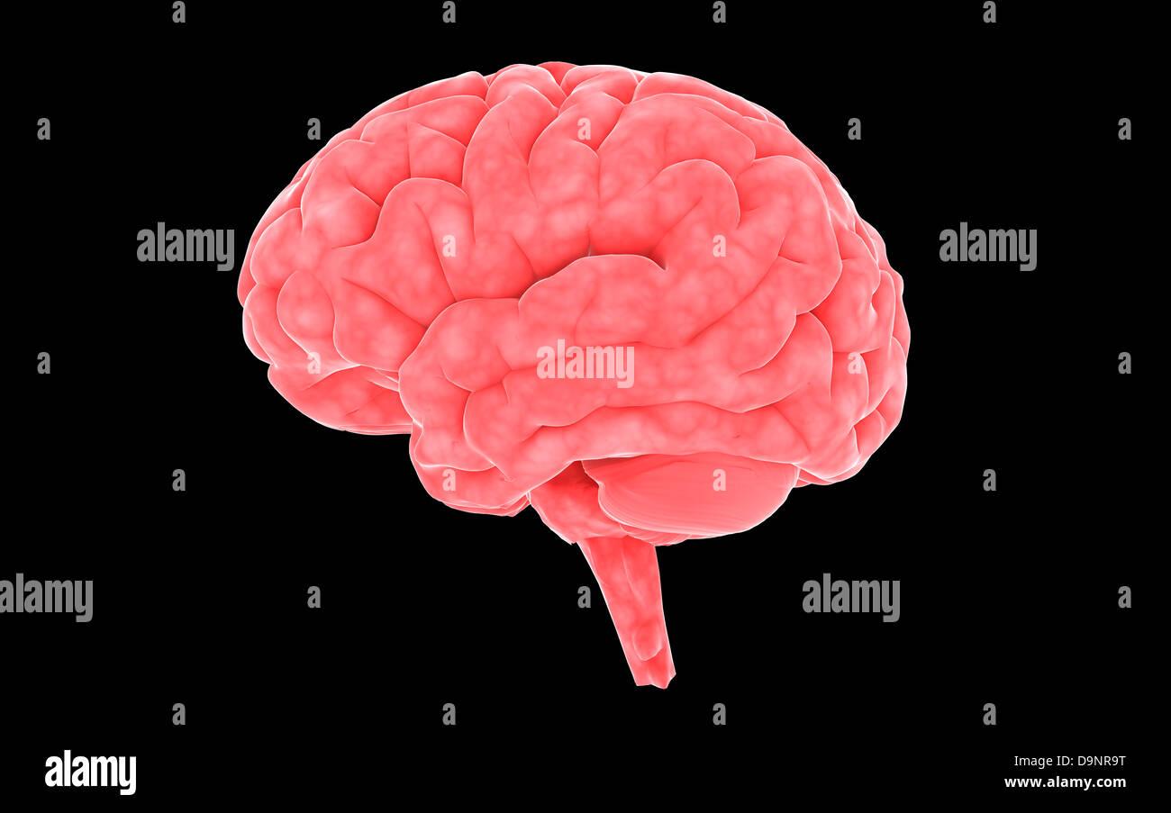 Image conceptuelle du cerveau humain. Photo Stock
