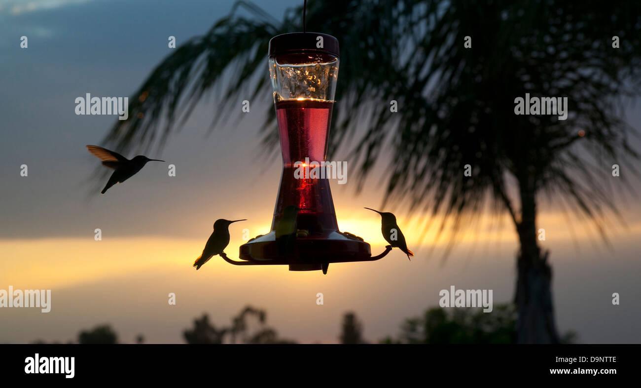 Au niveau du convoyeur d'oiseaux Photo Stock