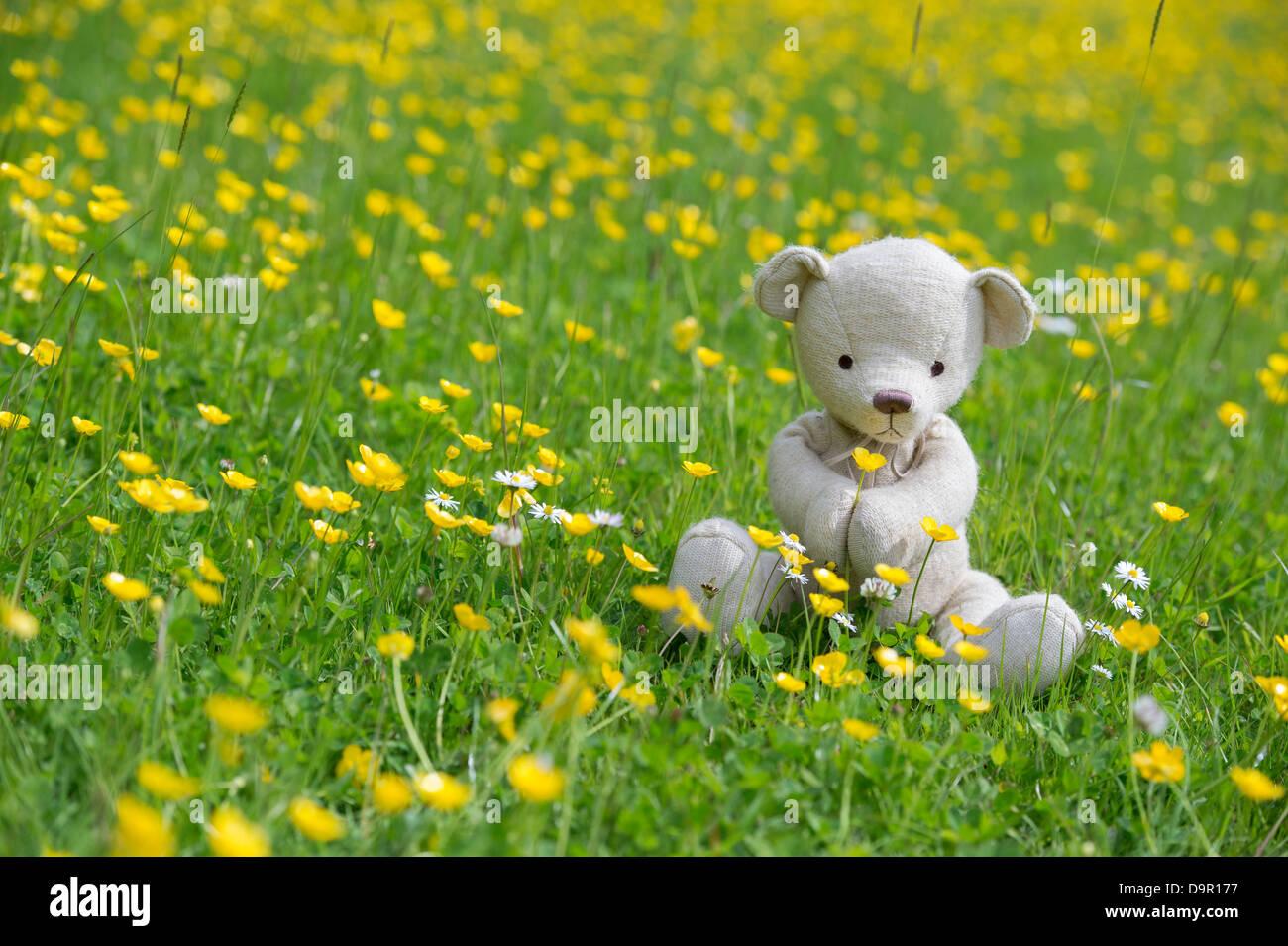 Ours en peluche tenant un bouton d'or dans une prairie Photo Stock