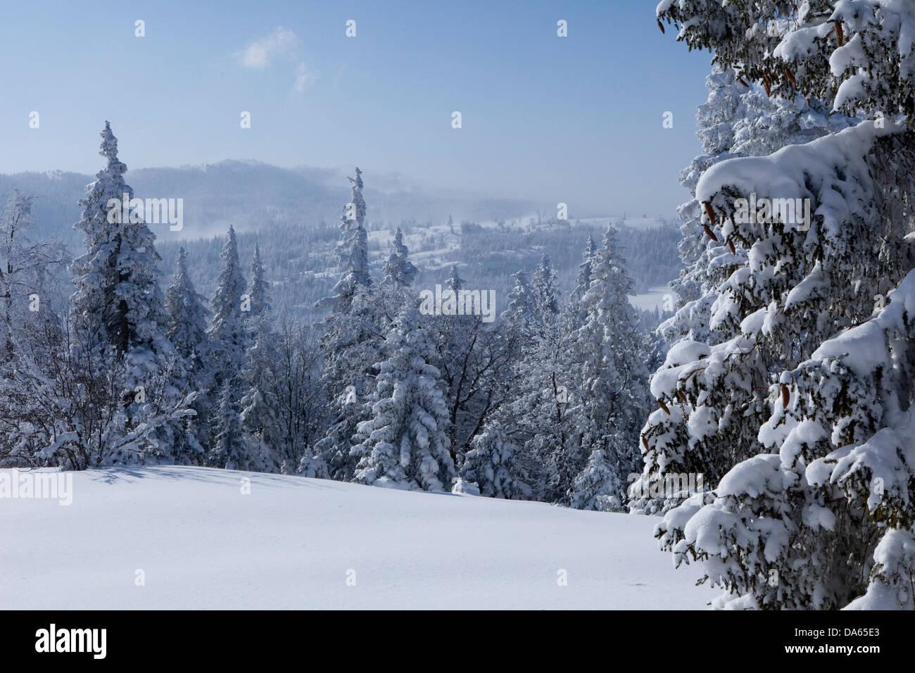 Bois d'hiver, Mont Tendre, hiver, canton, VD, Vaud, neige, arbre, arbres, bois, forêt, Suisse, Europe, Photo Stock