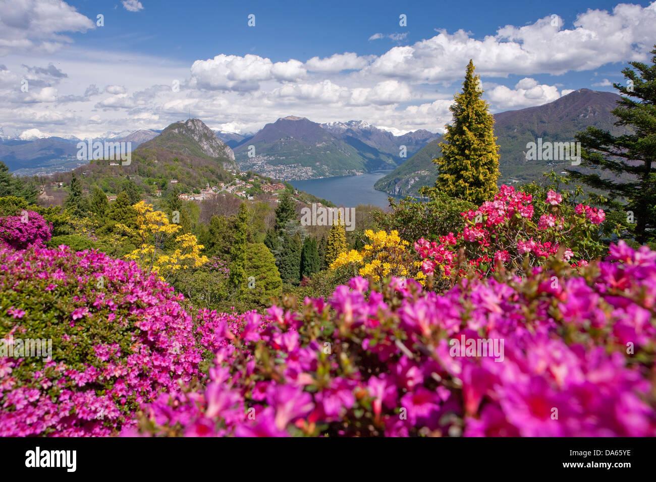 Blossom, rhododendron, Parco San Grato, Carona, canton, TI, Tessin, Suisse du Sud, fleur, fleurs, parc, la Suisse, Photo Stock