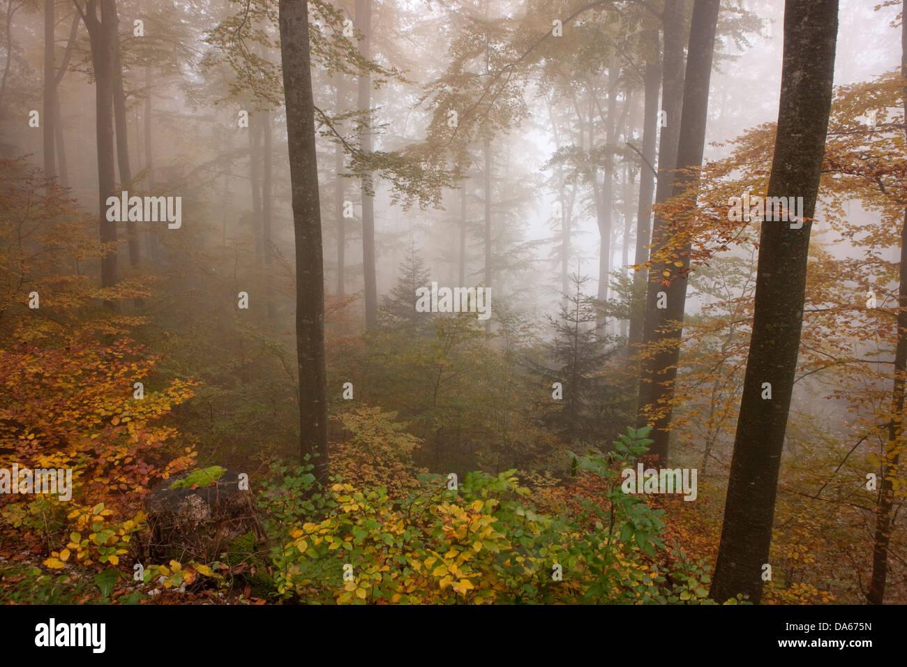 Bois, Forêt, Areuseschlucht, Jura, le brouillard, la mer de brouillard, brouillard, de ravin, canyon, bois, Photo Stock