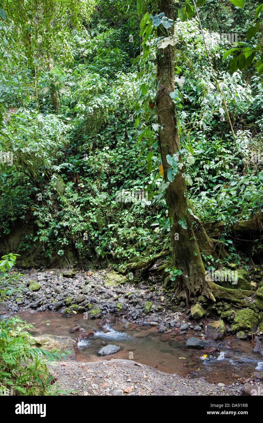 Rainmaker Conservation Project, Costa Rica Photo Stock