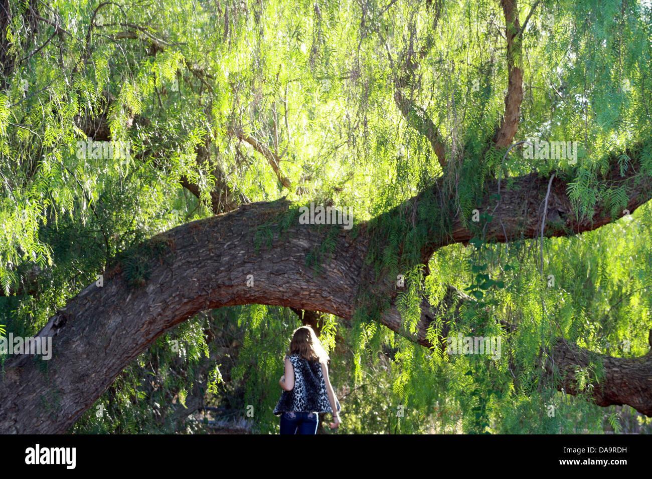 Fille et Willow Tree Banque D'Images