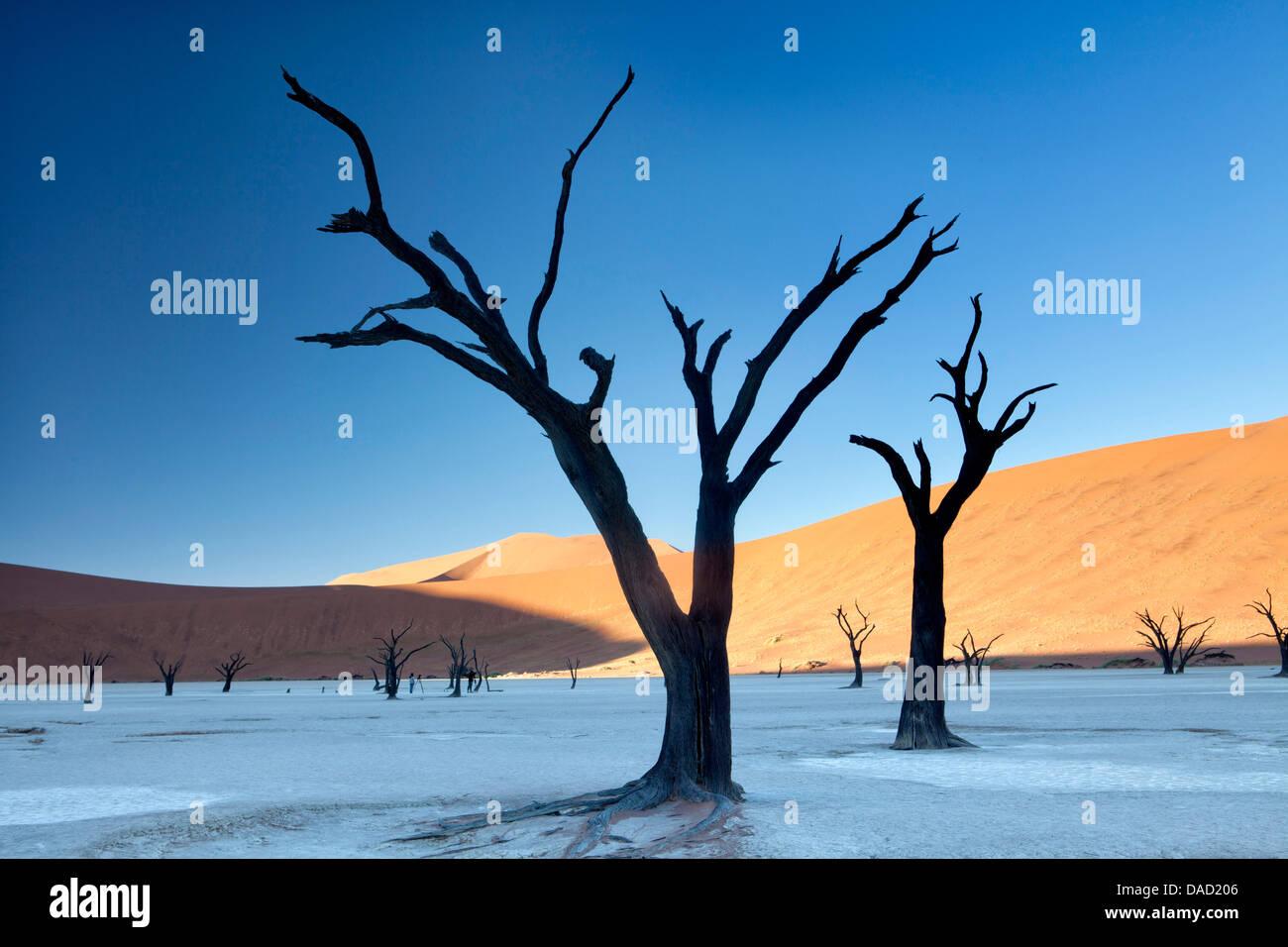 Camelthorn arbres morts, Dead Vlei, Désert du Namib, le Namib Naukluft Park, Namibie Photo Stock