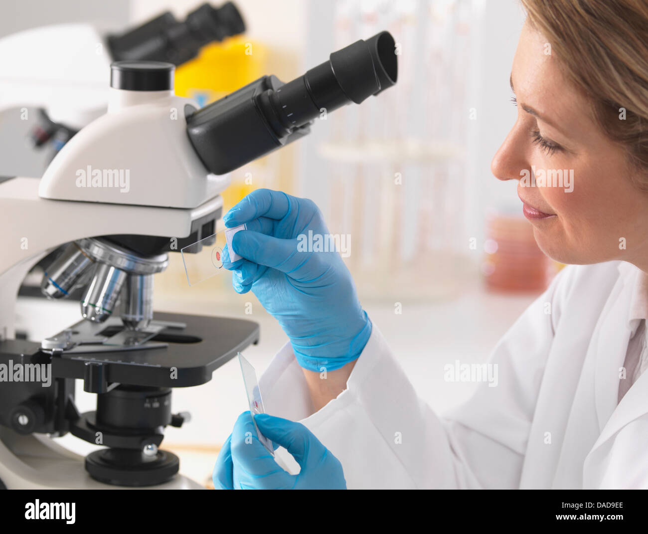 Microbiologiste femelle affichage lame sous microscope in lab Photo Stock
