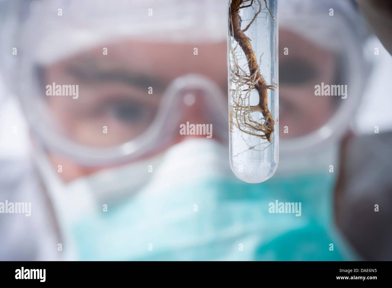 Scientist avec racines, Close up Banque D'Images