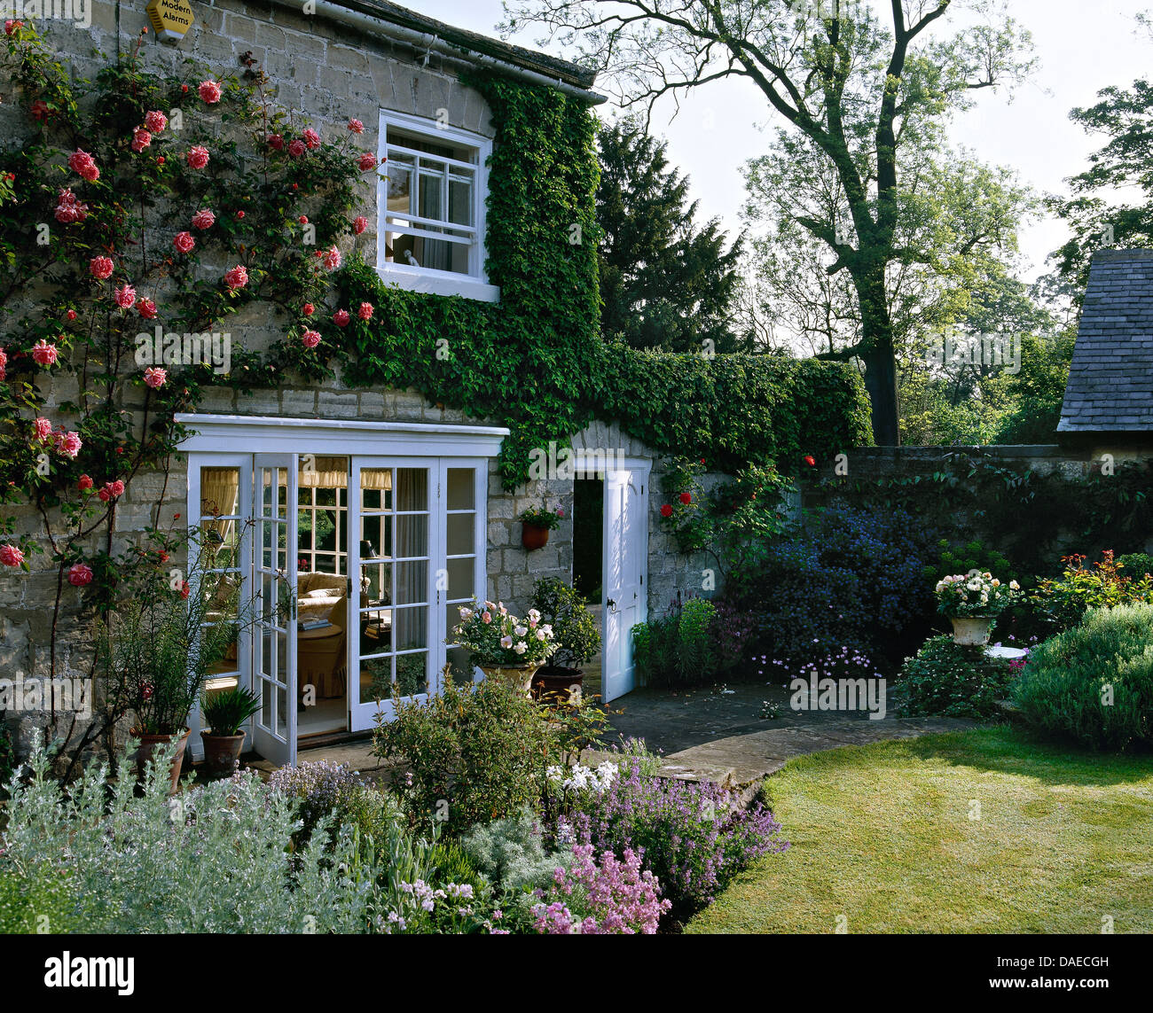 Escalade Rose Roses Sur Maison Ancienne En Pierre Avec Portes