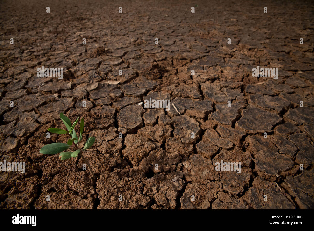 Paysage désertique dans le Parc National de Sarigua, Herrera province, République du Panama. Banque D'Images