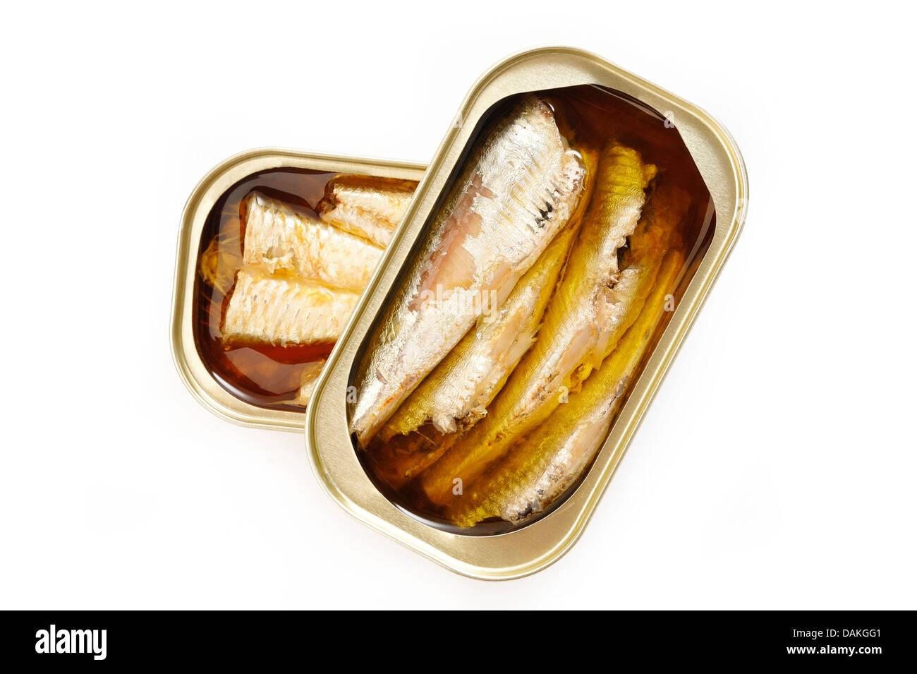 Sardines à l'huile d'olive sur fond blanc Photo Stock