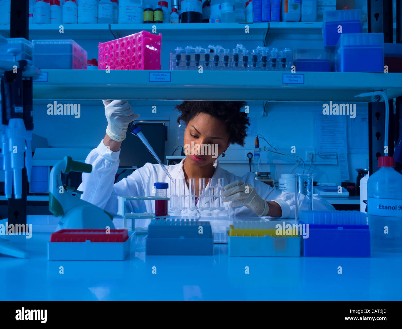 Scientist working in lab Banque D'Images