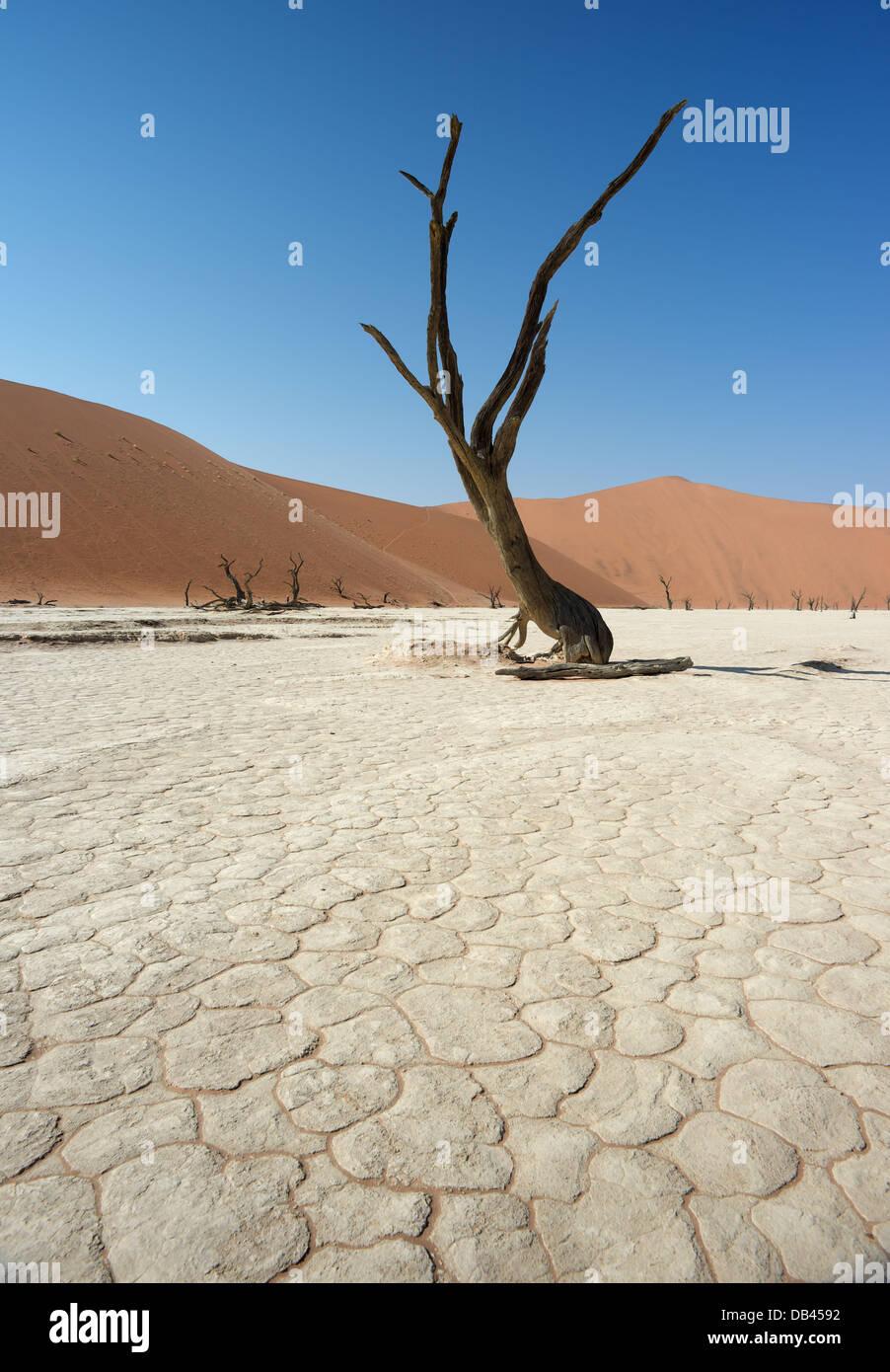 Dead Vlei Désert du Namib Namibie Photo Stock
