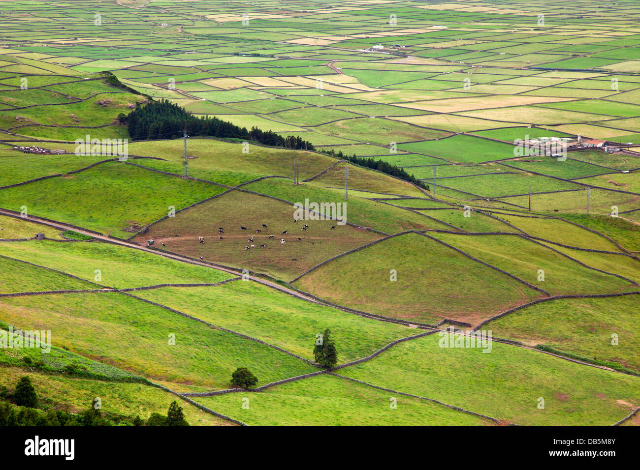 Patchwork paysage à la Serra do cume, l'île de Terceira, Açores Photo Stock