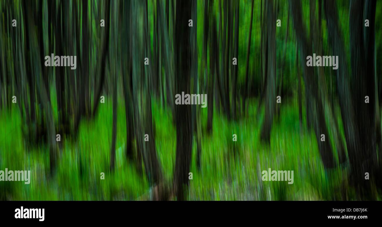 Forêt, abstrait, flou de mouvement Photo Stock