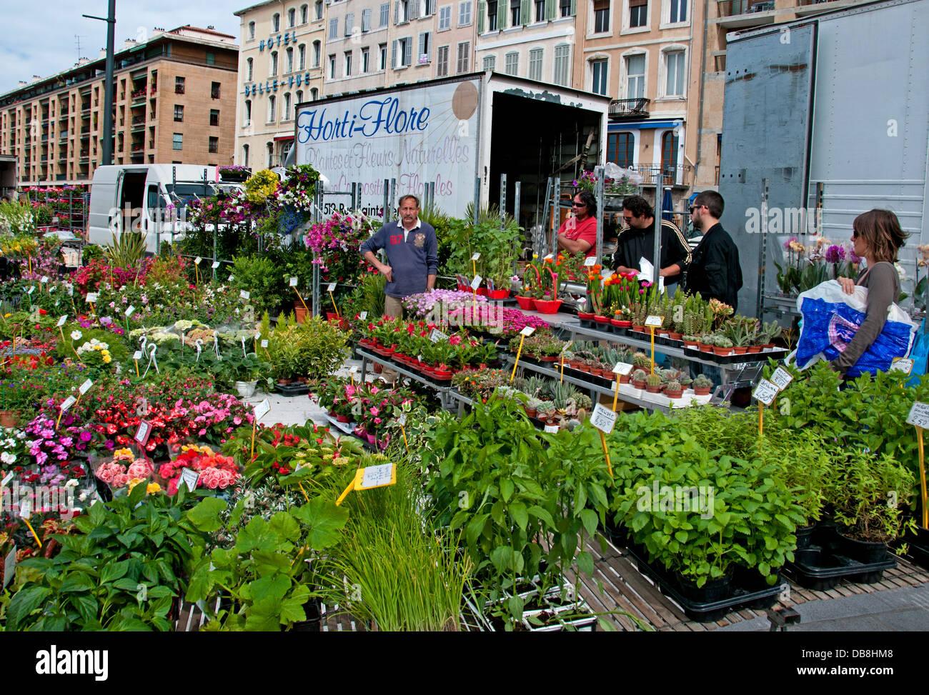 Marche Aux Fleurs Vieux Marseille Vieux Port France Provence French