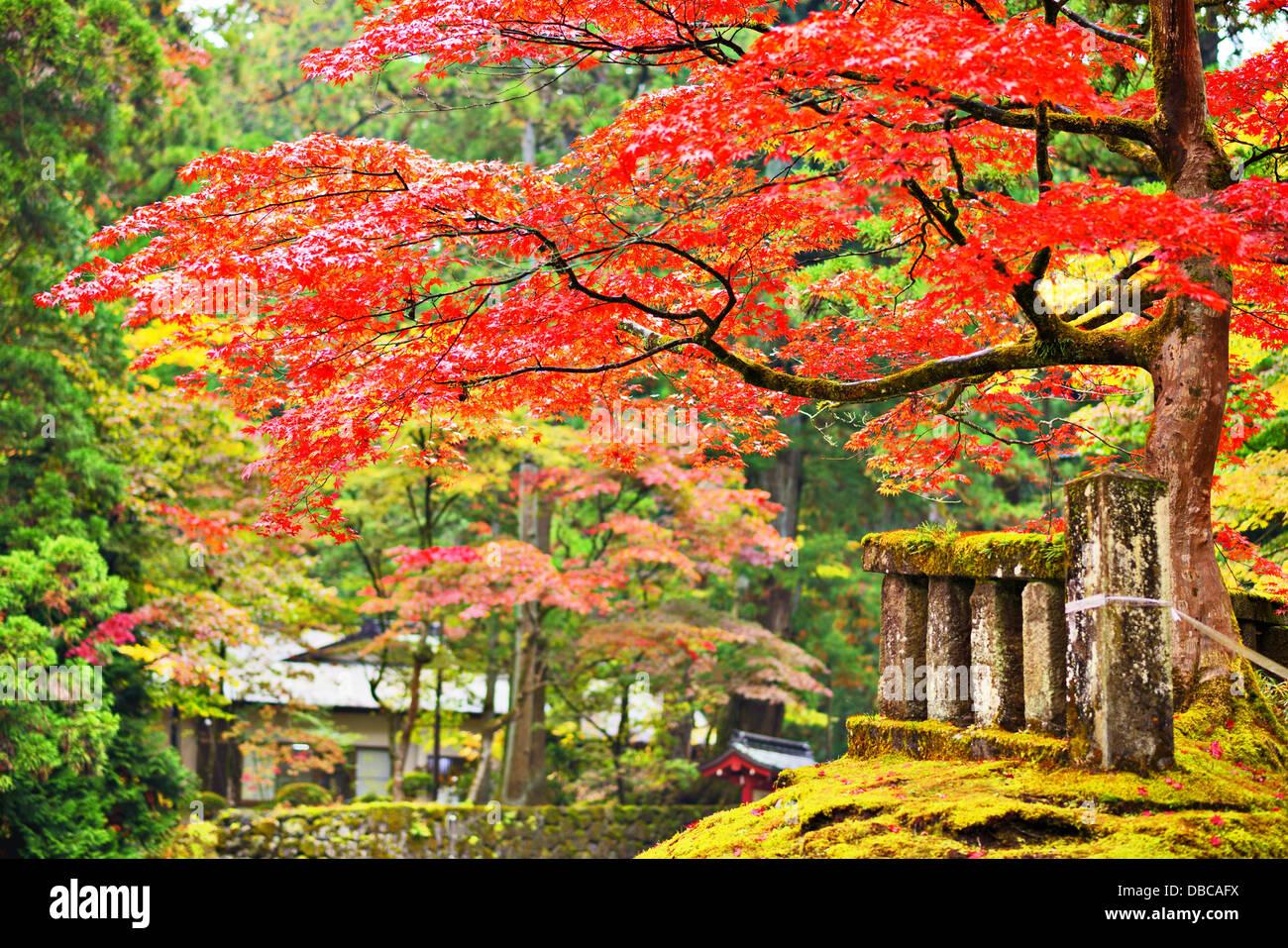 Feuillage de l'automne à Nikko, Japon. Photo Stock