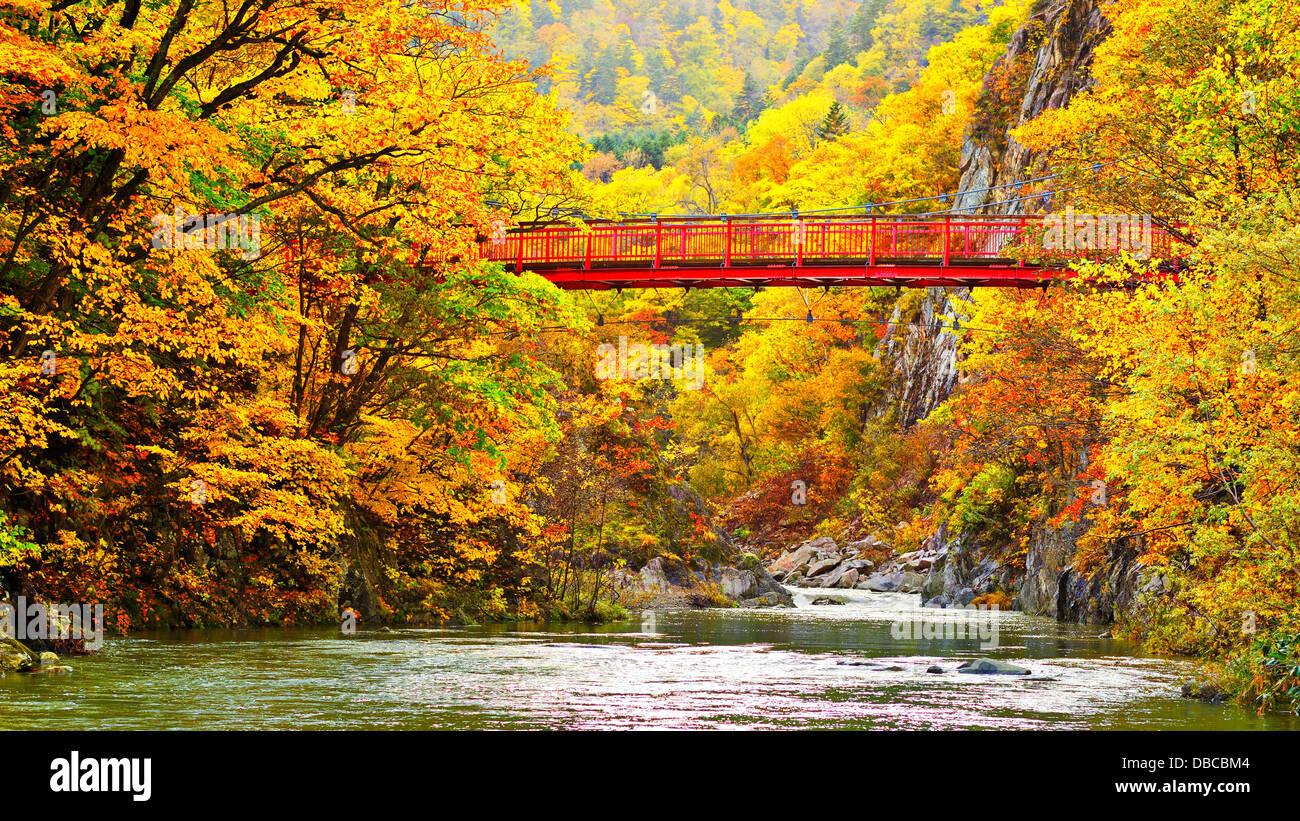 Feuillage d'automne dans la région de Jozankei, Hokkaido, Japon. Photo Stock