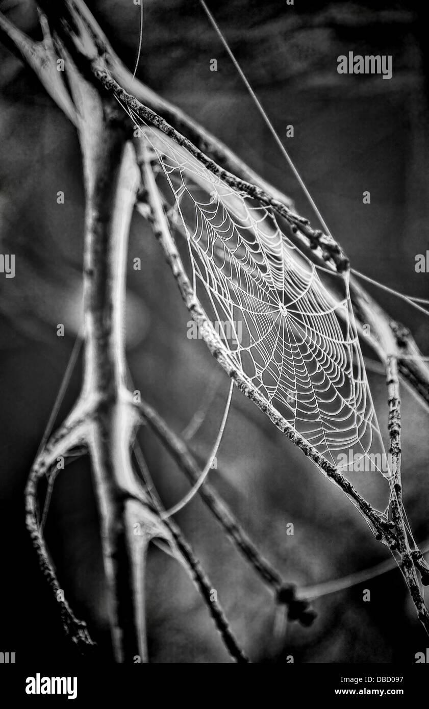 Creepy araignée macro araignées saut web Photo Stock