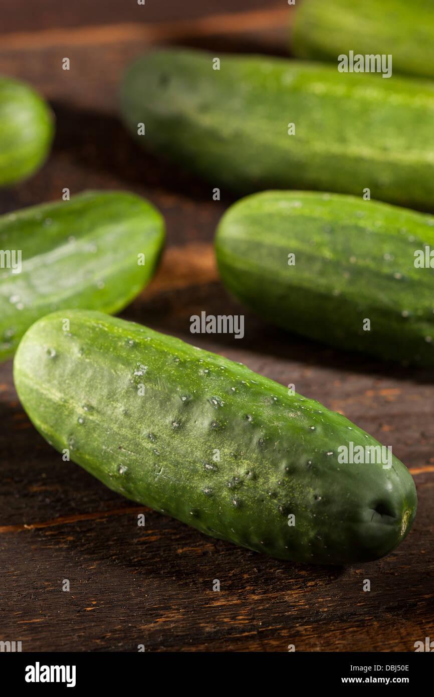 Concombres Cornichons vert biologique utilisé pour le décapage Photo Stock
