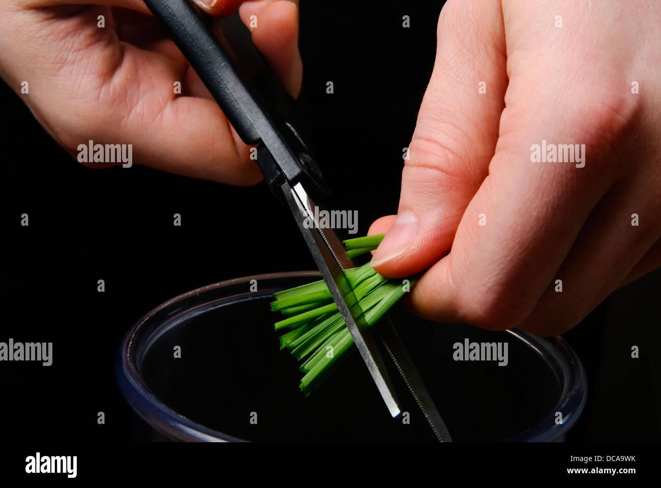 Blé de coupe avec des ciseaux. Photo Stock