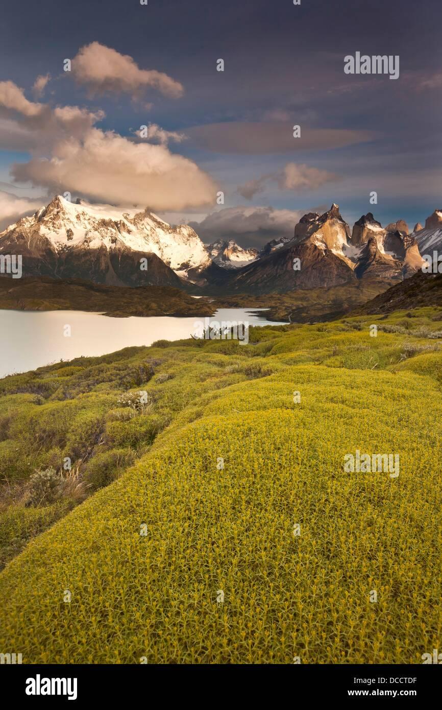 """Sommets Cuernos del Paine après l'aube, atabarrosa """"épineuse"""" Mulinum spinosum en fleur, Photo Stock"""
