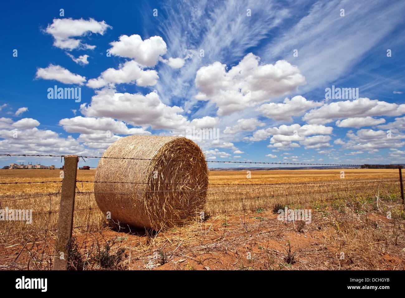 Culture du blé dans le milieu au nord de l'Australie du Sud Photo Stock