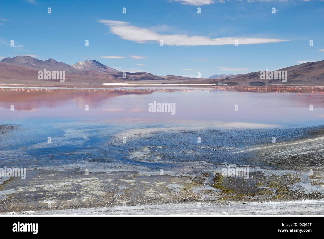 La Laguna Colorada dans le parc national REA, Bolivie Banque D'Images