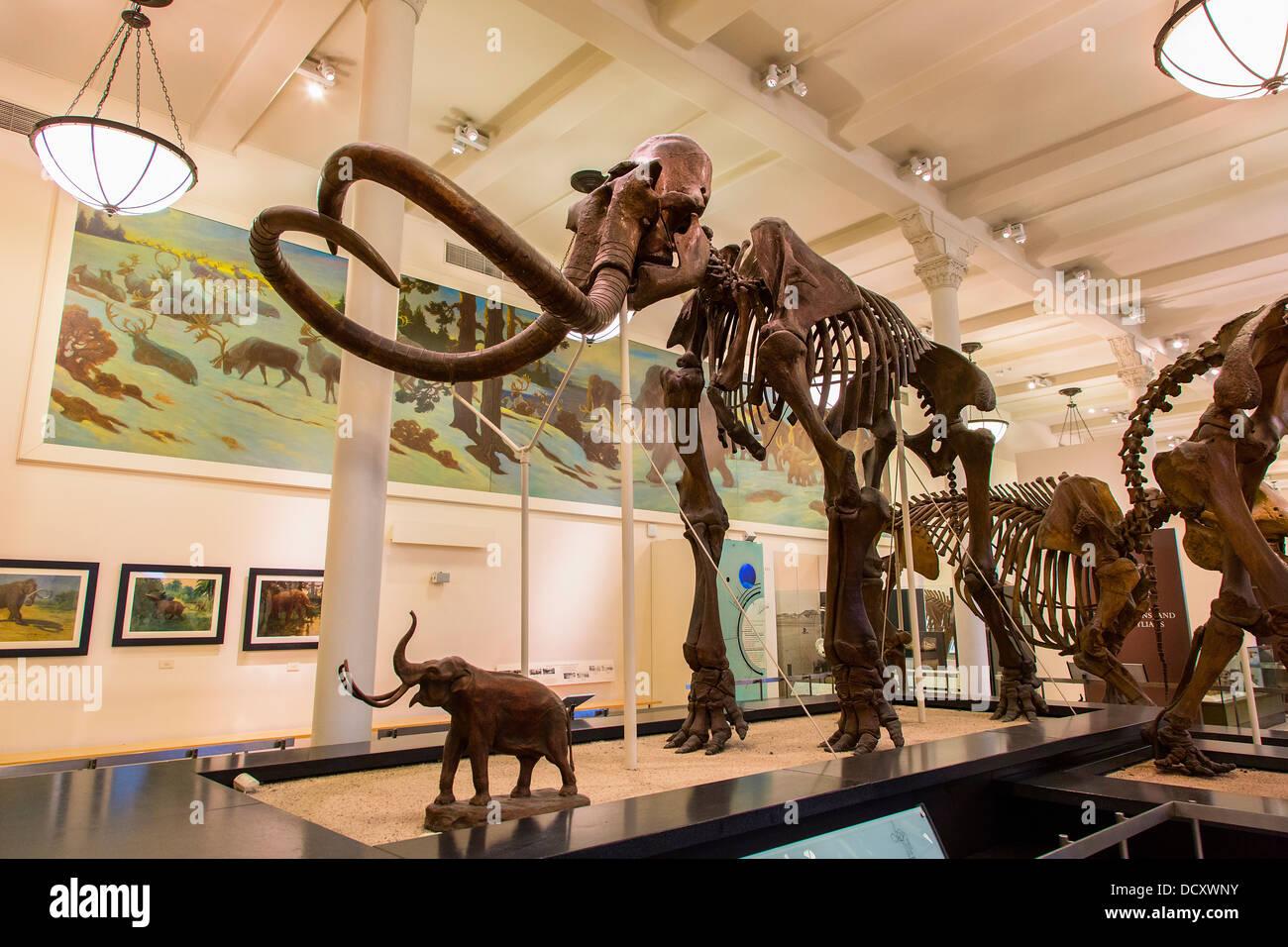 New York, le Musée d'Histoire Naturelle Photo Stock