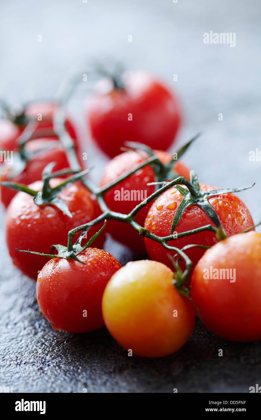 vigne de tomate Photo Stock