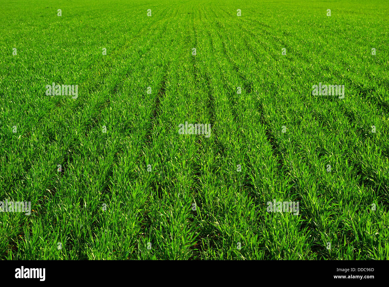 Fonds d'herbe Photo Stock