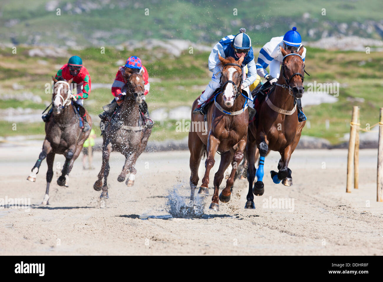 Courses hippiques Photo Stock