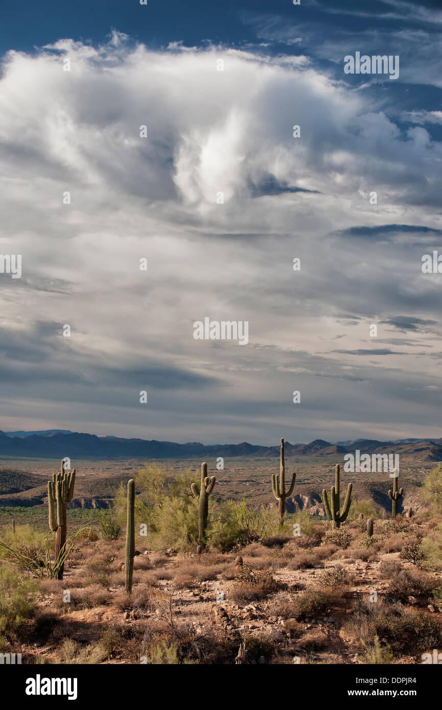 Les nuages de pluie de mousson se dissiper dans le désert de Sonora, en Arizona. Photo Stock