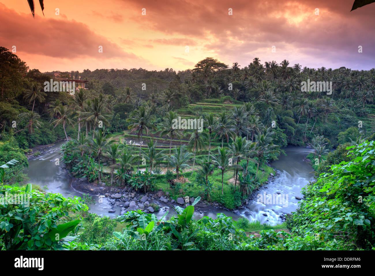 L'INDONÉSIE, Bali, Ubud, la vallée de la rivière Ayung et Sayan Photo Stock