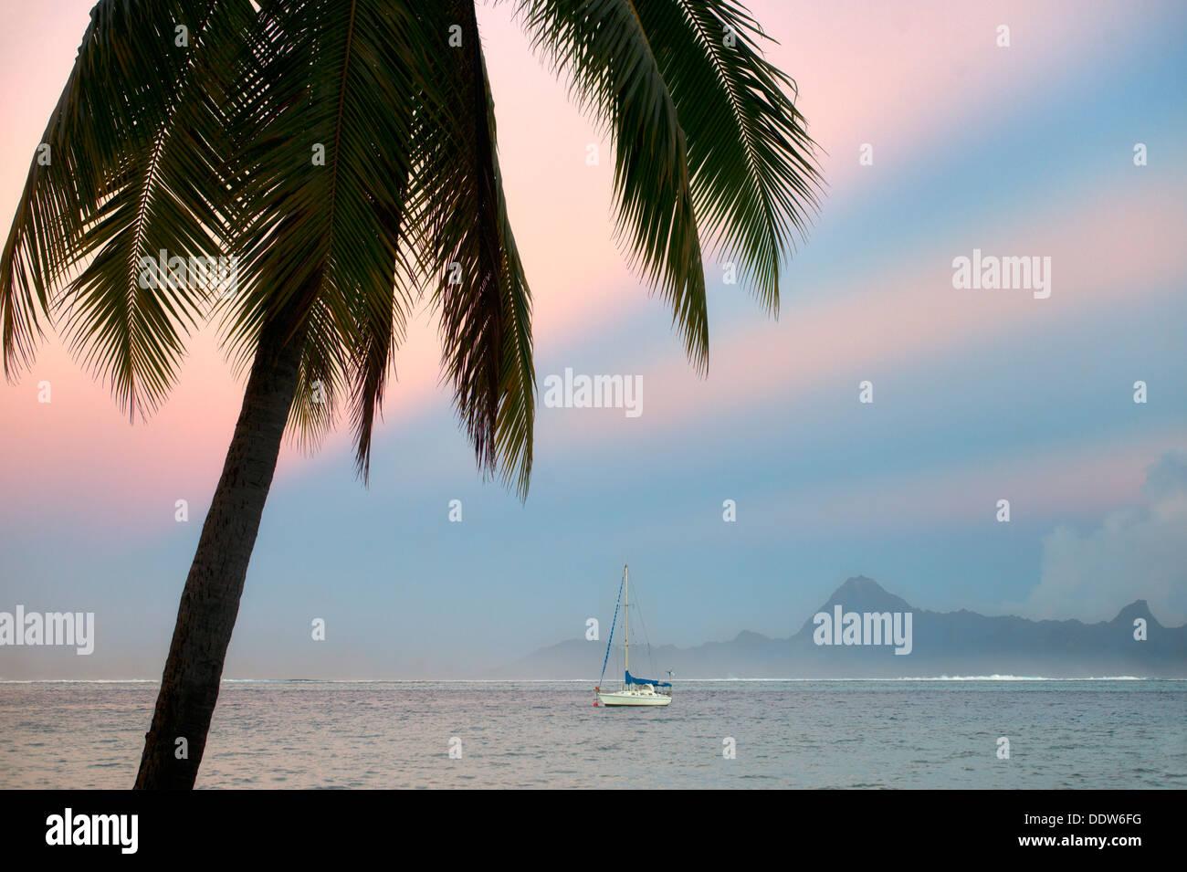 Palmier voilier, le lever du soleil et l'île de Moorea. Tahiti. Polynésie Française Photo Stock