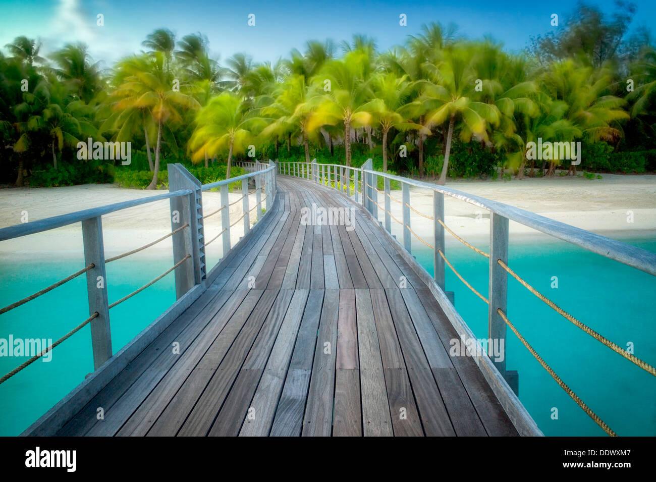 En promenade de palmiers dans le vent. Polynésie Française Photo Stock
