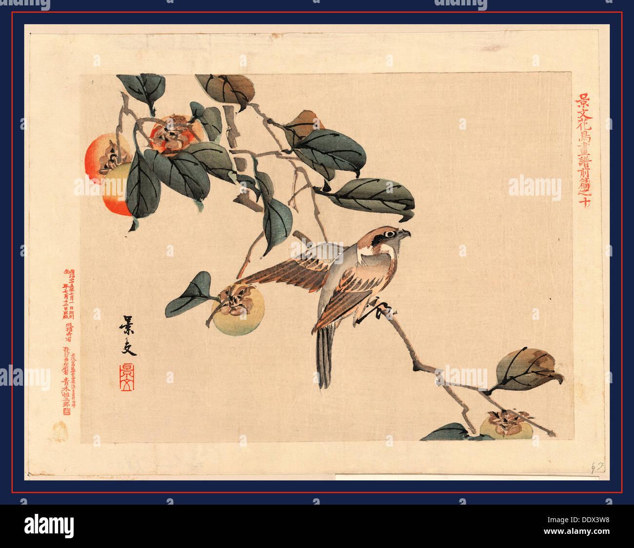 Pas Zenpen ju, page 10. 1892., 1: impression gravure sur bois, couleur; 20,9 x 27,3 cm., indique un oiseau perché sur une branche à persimmon Photo Stock