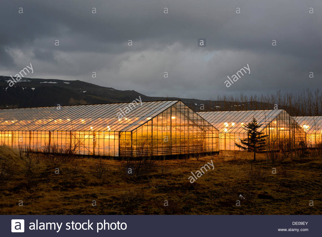 Serres illuminée au crépuscule, chauffée avec l'énergie géothermique Photo Stock