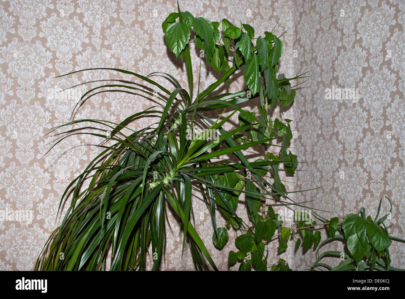 Une plante verte sur fond clair. Photo Stock
