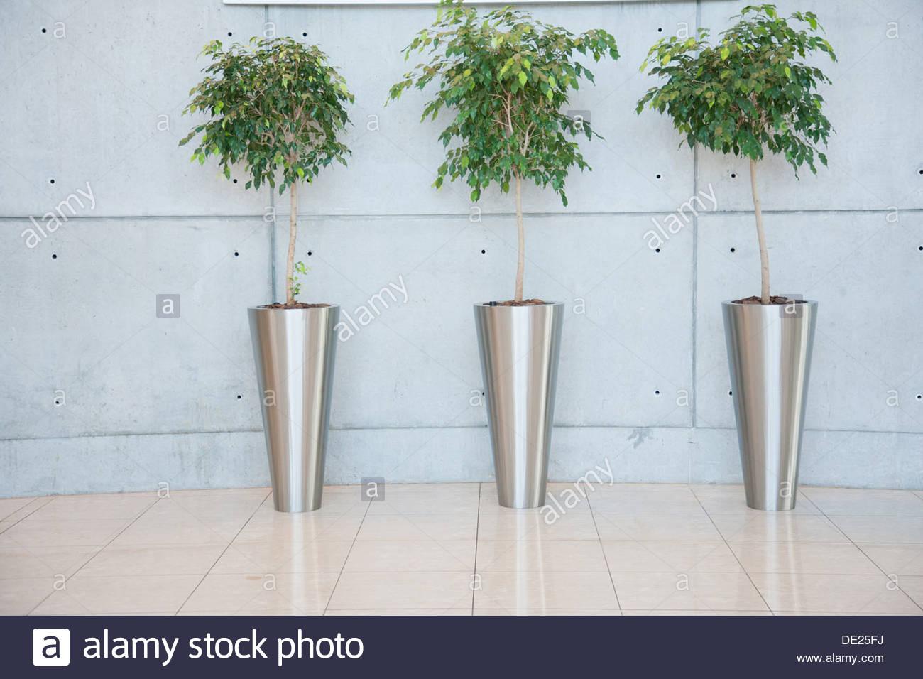 Plantes dans le hall d'entrée Photo Stock