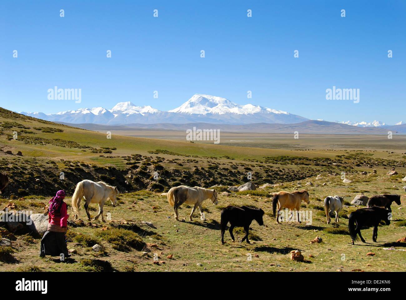 Les nomades tibétains, bergère conduisant les chevaux à travers le vaste plateau, Kailash, Kora, enneigées de la montagne Gurla Mandhata Banque D'Images