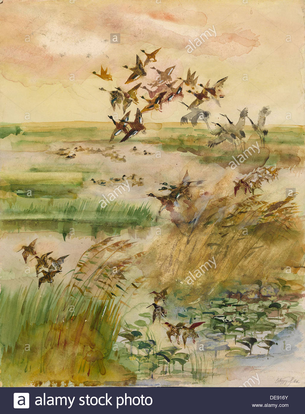 Les canards et les grues, 1966. Artiste : Kurdov, Valentin Ivanovitch (1905-1989) Photo Stock