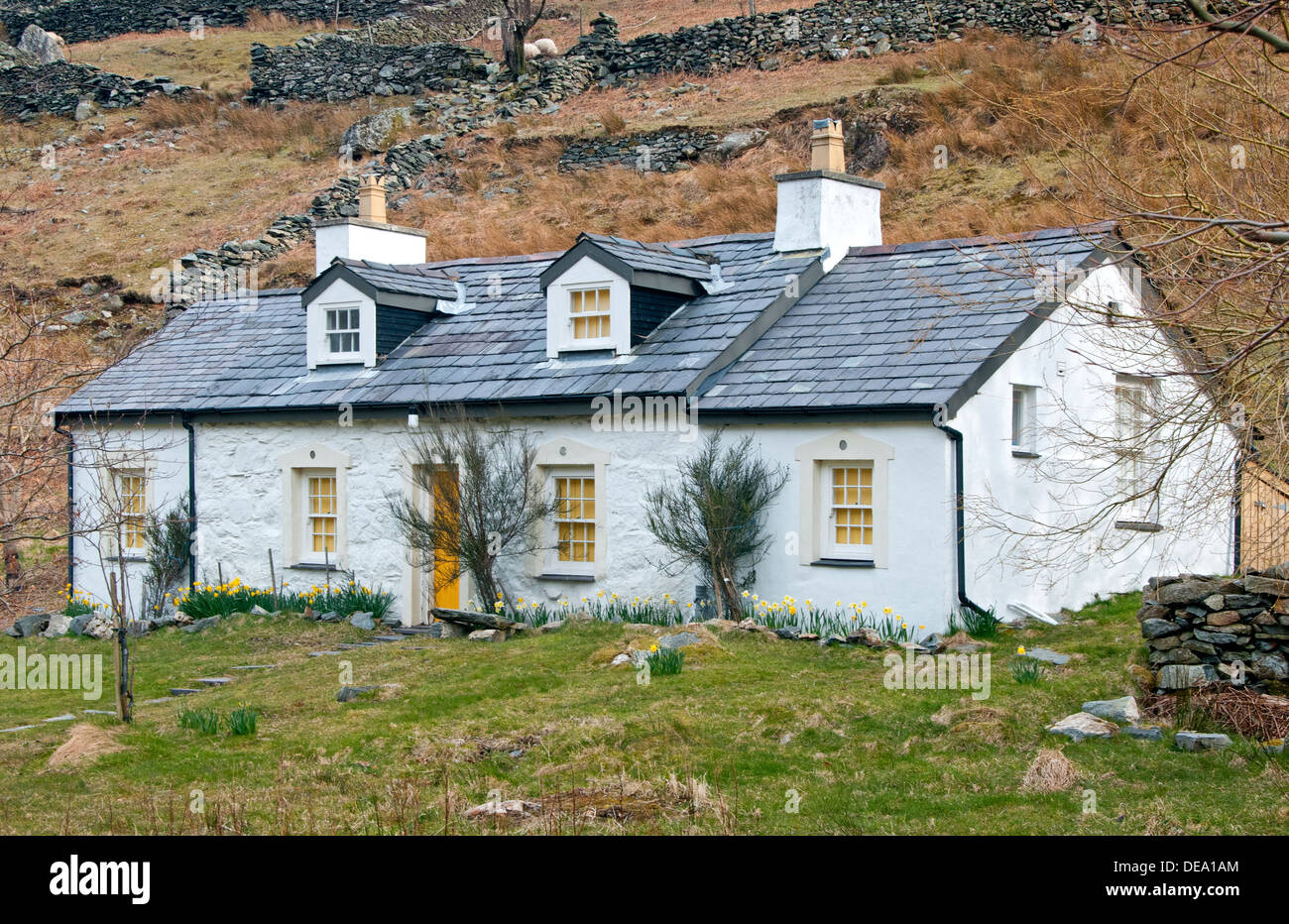 Cottage gallois traditionnel blanchi à la chaux au printemps, Nant Peris, Llanberis Pass , Parc National de Snowdonia, le Nord du Pays de Galles, Royaume-Uni Photo Stock