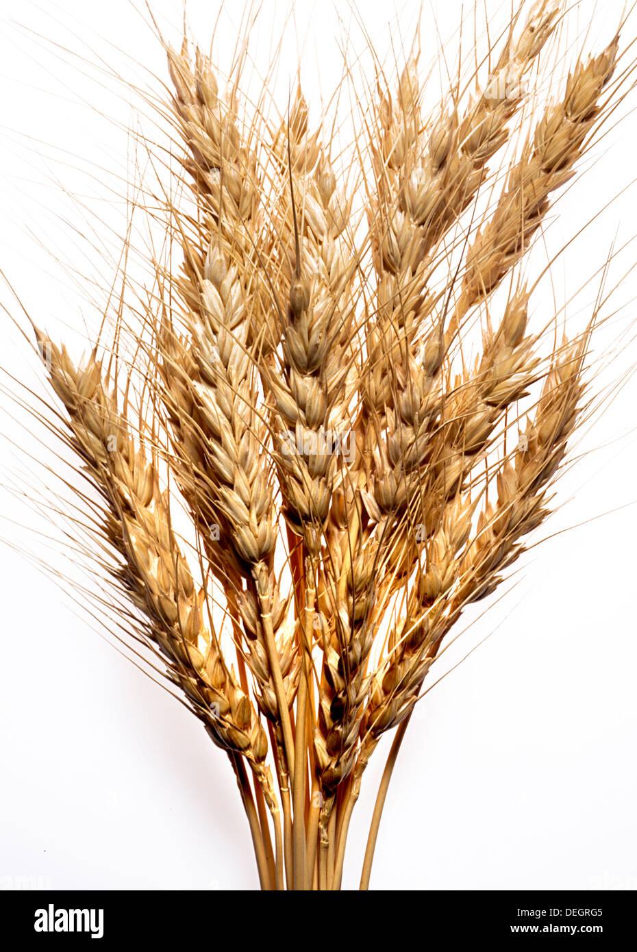 tiges de blé Photo Stock